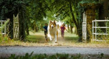 1584204312_Lassie-hazater-Kultik-Szentes-Mozi