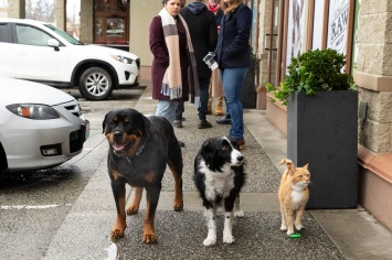 Cats & Dogs 3: 02-05-20, Unit day 17 Photo Credit: Ryan Plummer/2020 Warner Bros. Entertainment Inc.