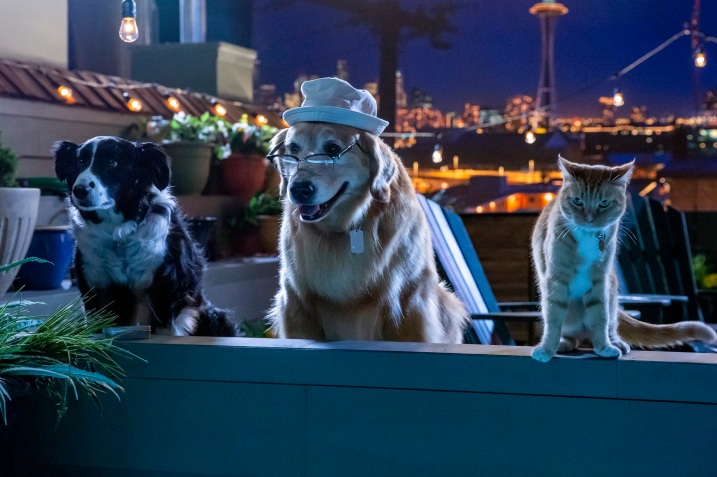Cats & Dogs 3: 01-29-20, Unit day 13 Photo Credit: Ryan Plummer/2020 Warner Bros. Entertainment Inc.